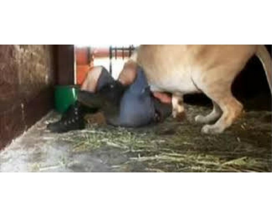 Парень зашёл к львятам в вольер. А теперь посмотри как отреагировала на это мама-львица! В голове не укладывается!